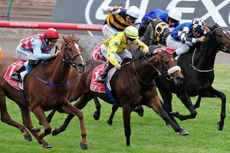 Câu chuyện nước Úc và những chú ngựa